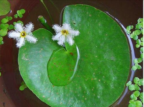 bunga serpihan hati